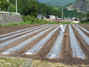 田村ファーム&フォレスト 畑のようす