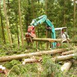 田村ファーム&フォレスト 林業のようす
