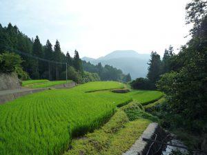 田村ファーム&フォレスト 田圃の写真